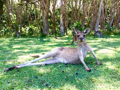 Where to See Native Australian Animals in the Wild