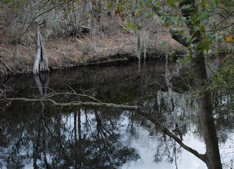 Au Naturale in White Springs | Florida Hikes!