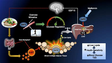 Cellular Energy Sensing and Metabolism—Implications for