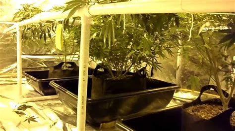3000 watt 10x10 grow tent - YouTube
