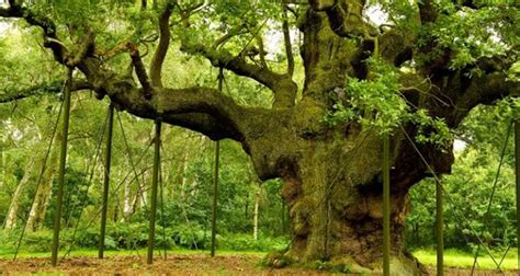 Protect Sherwood Forest