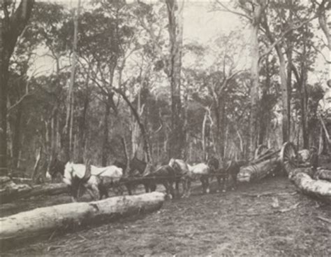 Forest heritage - Parks and Wildlife Service