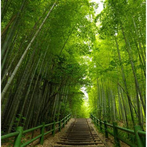 Makinogaike, Nagoya, Japan - Bamboo grove at Makinogaike park